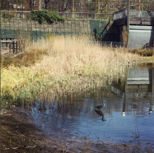 Pond dipping mile end